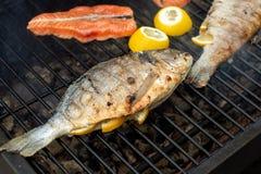 Välfylld fisk för citron som ligger på gallerspisgallret royaltyfri foto