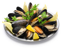 Välfyllda musslor, turkisk mat Arkivbilder