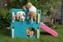 Välfyllt spela för hundkapplöpning Royaltyfria Foton
