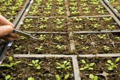 välja för handväxtplantor Arkivfoto