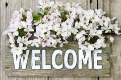 Välkommet tecken med vårbuketten av vita blommor Arkivbilder