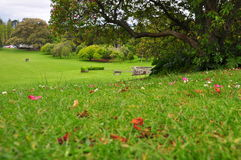 Välkomna tillbaka våren, Cromwell parkerar, NZ royaltyfria bilder