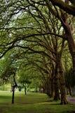 Välva sig trädfilialer fodrar vandringsledet till och med parkerar i Cardiff UK royaltyfri bild