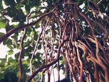 Vän av ett träd Royaltyfria Foton