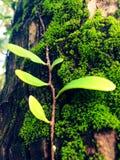 Vän av trädet Royaltyfria Foton