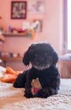 vän little som är min fotografering för bildbyråer