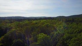 Vänd över träd med trevlig lensesignalljuseffekt lager videofilmer