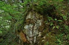 vänd stenen mot Arkivbilder