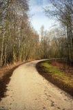 Vända asfaltvägen i vårskog royaltyfri foto