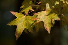 vända för leaves Royaltyfri Bild