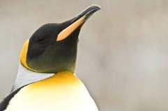vända konungpingvinet mot skywards Arkivbilder