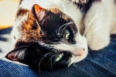 vänder täta ögon för katt upp feline grön grå sight mot Arkivfoto