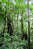 Vändkretsdjungel med olik art av vegetation arkivbild