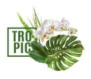 Vändkretsen planterar banret Royaltyfria Bilder