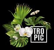 Vändkretsen planterar banret Fotografering för Bildbyråer