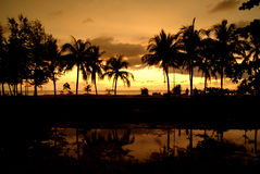 Vändkretspulms på solnedgången, himmelbakgrund arkivbilder