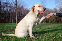 Vänlig hund Arkivbild