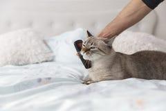 Vänlig smekning mellan en man och hans katt royaltyfria foton