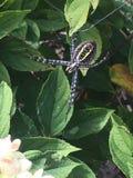 Vänlig spindel royaltyfri bild