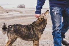 Vänlighet och förtroende av en tillfällig hund Arkivbilder