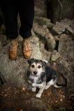 Vänligt hundsammanträde bredvid hans ägare, på en gå i skogen A ingen specifik avelhund, byracka Arkivbild