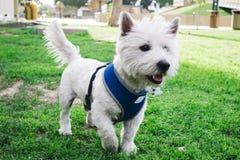 Vänner den min hunden Royaltyfria Foton