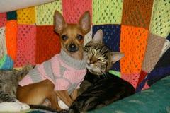 Vänner för hund och för en katt Royaltyfri Fotografi