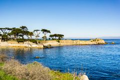 Vänner pekar på en solig och klar vinterdag, den Stillahavs- dungen, Monterey fjärdområde, Kalifornien royaltyfri foto