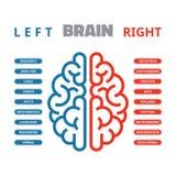 Vänster och höger vektorillustration för mänsklig hjärna Infographic vänster och höger mänsklig hjärna Fotografering för Bildbyråer