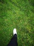 vänstert ben i en vit sko och svarta flåsanden på grönt gräs arkivbilder