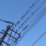 Vänta för fåglar Royaltyfri Foto