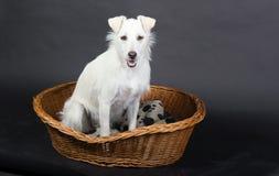 Vänta för hund Royaltyfria Foton