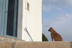 Vänta för hund Arkivbilder