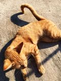 vänta för kattförälskelse som är ditt Arkivbild