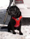 vänta för räddningsaktion för svart hund Arkivbild