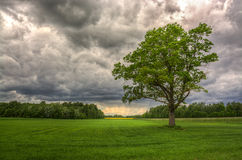 vänta för regn Royaltyfria Foton