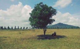 vänta under trädet (berteduhdibawahpohon) Royaltyfri Bild