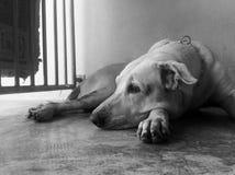 Väntande hund Royaltyfri Foto