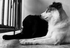 Väntande hund Royaltyfria Bilder