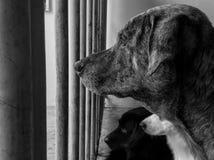 Väntande hund Fotografering för Bildbyråer