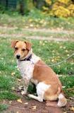 Väntande på ägare för hund royaltyfria foton