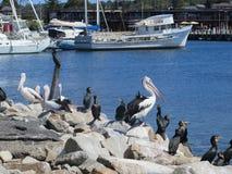 Väntande på fisk Royaltyfria Foton