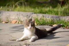 Väntande på rov för härlig katt royaltyfri fotografi