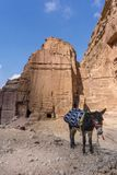 Väntande på turist för åsna i den forntida staden av Petra, Jordanien royaltyfri foto
