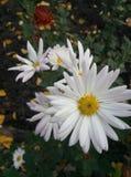 Värld av blommor arkivbild