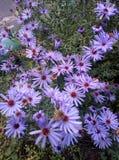 Värld av blommor royaltyfria bilder