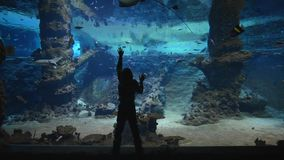 Värld av fisken på akvariet, pys som betraktar fisken och stingrockor i stor oceanarium med den marin- naturen i klara blått arkivfilmer