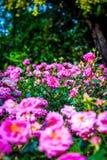 Värld av flora Fotografering för Bildbyråer