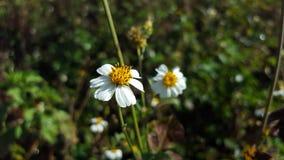 värld för vildmark för dal för liljanaturryss arkivbild