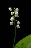 värld för vildmark för dal för liljanaturryss Royaltyfri Fotografi